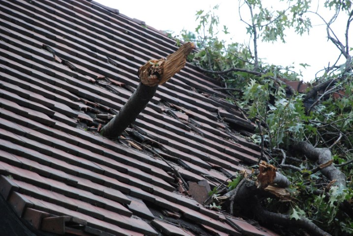 arbre-dans-toit